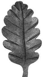 Picture of oak leaf 52730